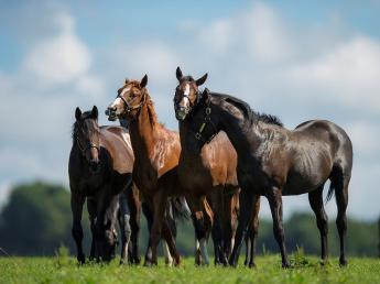 美しく駆け抜けるサラブレッド。 あなたも私たちと一緒に魅力的な競走馬を育て上げてみませんか? 未経験者も女性も活躍中です!