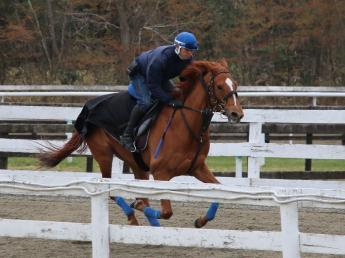 私たちと一緒に魅力的な競走馬を育て上げてみませんか? 仙台まで1時間。山元トレーニングセンターで人材募集中 ◎騎乗経験者の方歓迎!