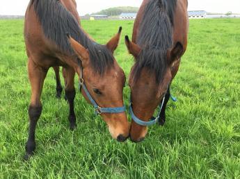 全ては「強い馬」をつくるために! 馬にとって、人にとってより良い環境づくりに努める追分ファームで一緒に働きませんか?