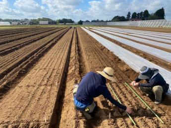 自分の携わった作物が新たに世の中に出ていく経験ができるかも!?