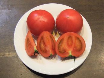 ◎急募◎【7月~9月の期間限定アルバイト】 これから本格化するトマト収穫のお手伝いをお願いします!少量多品目栽培に興味があり、長期的に働きたい方も歓迎! 新規就農を目指す方も大歓迎!