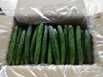 土をつくり、食をつくり、人をつくる。 日本の「食」を自分たちの手でつくっていきませんか? ~2020年4月新規就農しました~