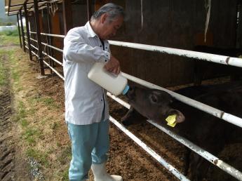 ☆★未経験でも安心!マニュアルがあるので作業しやすい!★☆ \肉牛農家を目指して、まずは肉用牛ヘルパーから始めてみませんか?/