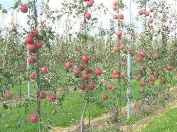 新技術でリンゴ産業の常識を覆す! 世界市場を見据えるスタートアップ企業で共に成長していきませんか?