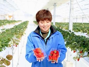 【いちごの栽培計画などを立てられる方】男女不問! いちごの栽培経験がある方必見!!栽培・加工・販売を手がけ6次産業化を進めています!
