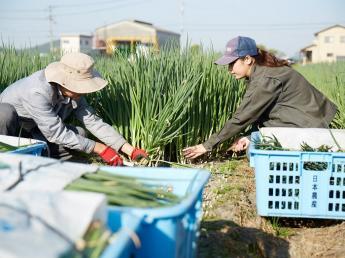 農業で香川の街を元気に!! 企業が仕掛ける農業だから安定して働けるのも魅力♪