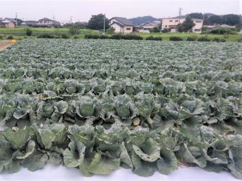 農業経験者募集! 関西の大手スーパーで販売する野菜の商品開発、生産に一緒に取り組んでいきませんか? ◎待遇充実 ◎週休2日