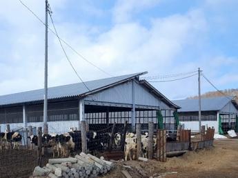 星がキレイな町、陸別町で、じっくり牛を育てていきませんか? 子牛~親牛になるまで育てていく仕事です。 ◎未経験の方も歓迎!