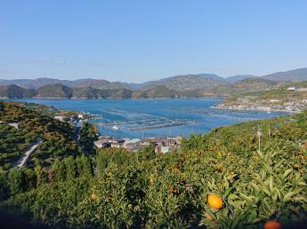 【1名募集】みかん農家でのアルバイト募集! 緑に囲まれた自然豊かな「日本一のみかんの里」でのお仕事です!