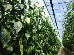 農業がある。都市がある。あなたの夢かなえる街 北海道・旭川