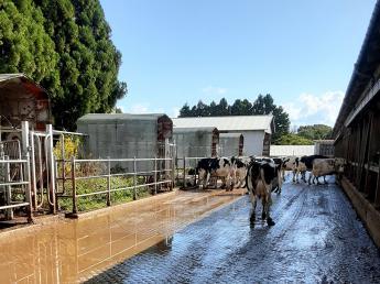 自然豊かな能登半島にある牧場です!自家配合飼料や自家受精にこだわり、牛に寄り添って大切に育てています!