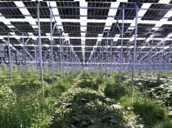 【経験者募集!次世代型農業の実践法人】 「有機栽培」×「ソーラーシェアリング」で安心安全な野菜作り! 今までのご経験を当社で活かしませんか?