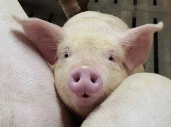 若手スタッフが活躍できる職場。その理由は・・?  未経験の方歓迎!「豚が好き」「食に関わりたい」という方、養豚の仕事にチャレンジしませんか?