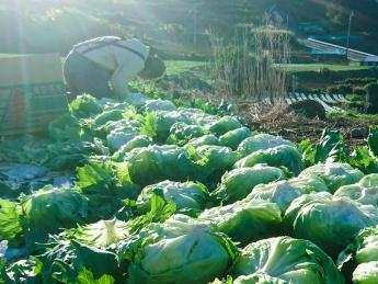 【未経験OK!】 規模拡大の為、積極的に採用! 長崎県雲仙市の温暖な気候と広大な自然に囲まれながら農業やりませんか? 働きやすい職場を整備してお待ちしています!