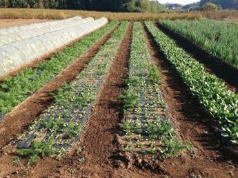 有機大豆・有機野菜を作ろう!茨城・老舗納豆メーカーの新農業事業の中心となって働きませんか? 【週休2日・残業なし】