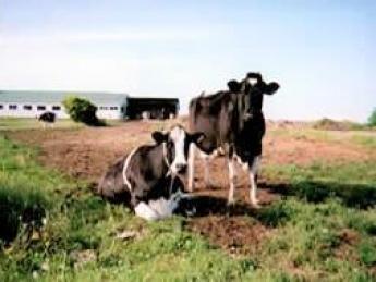 \年齢不問・社会保険完備/『酪農をしたいという気持ちを応援したい』『酪農に従事する人を増やしたい』 その想いで酪農経営を続けています!【未経験者歓迎】