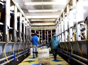 酪農業界で知る人ぞ知る牧場 しっかり技術を身に着けられる稲川牧場で酪農ライフをスタートさせませんか?