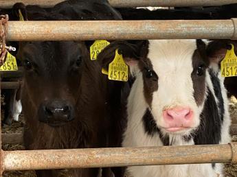 【アルバイトから正社員登用あり♪】\実働7時間/ 仔牛のミルクをあげる哺育業務のお仕事♪ 動物が好き!という方であれば大歓迎です♪