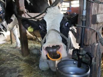 基本からしっかり教えていきます 牛の仕事に興味関心のある方、一緒に働きませんか?