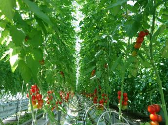 """私たちは湘南藤沢の""""かかりつけ""""農家を目指します! 事業拡大に向けて正社員&パート同時募集"""