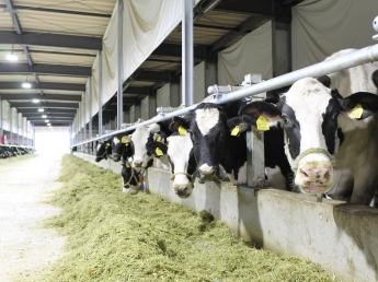「こんな酪農ならぜひやってみたい!」 未来の若者たちにそう思ってもらえる酪農の実践を目指して、日本酪農発祥の地に新たに牧場が誕生! オープニングスタッフ4名募集