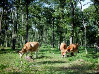 景色からも牛乳からも四季を感じられる放牧酪農! かわいいジャージー牛の牛乳でつくるこだわりの乳製品 \将来の牧場長候補としてイチから頑張ってみませんか/