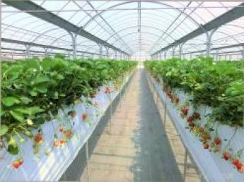 \待遇充実/都市近郊の笑顔溢れる農園観光いちご農園で元気いっぱい働きませんか?