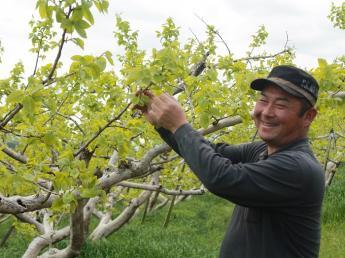 奈良・西吉野のフレンドリーな柿農家で一緒に働きませんか? ◎未経験の方も歓迎!