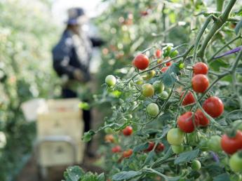 \期間限定の農業アルバイト!/ 北海道で2か月~数か月の限定移住しませんか?