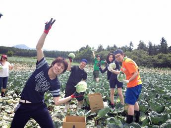 未経験者歓迎! 嬬恋村のフレンドリーなキャベツ農家で一緒に農作業しませんか?