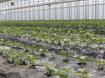 2020年から本格的に農業生産をスタートしたばかりの新規農業参入企業で一緒に農業にチャレンジしませんか? 【長期正社員】【期間限定アルバイト】【パート】同時募集!