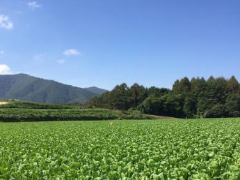 一緒に高原野菜を作りませんか?当農園では今年も多種類の野菜を栽培します!★3食食事付き ★寮費無料