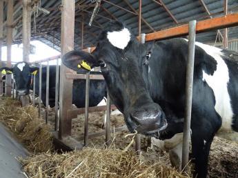 北海道最北端の地、稚内で牛とともに暮らしませんか? ◎長期希望者/短期(3か月以上~OK)同時募集◎