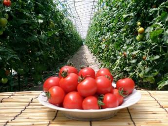 仲間と土を耕し、心を耕し、お客様に笑顔になってもらえる仕事をしませんか? ◎農業未経験の方歓迎!