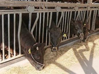 新規就農15年目!市場に好まれる子牛作りを目指しています! ☆未経験者大歓迎!新規就農を目指す方も是非! ☆5年に1度の和牛のオリンピック「全国和牛能力共進会」を目指しています! ☆住宅手当支給!鹿屋市に移り住みたい方必見! ☆可愛い子牛のお世話!動物好きにはたまらない!?