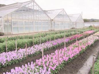 お花好きな方大歓迎!花の栽培管理のお仕事です