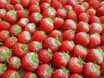 【限定1名×夏の短期アルバイト】夏いちごの収穫のお仕事!涼しく自然豊かな環境があなたを待っています!