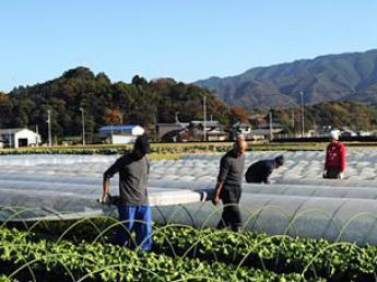 『心を豊かに・暮らしを豊かに・大地を豊かに』農業を通して3つの「豊さ」を手に入れよう☆農業やりたい方大募集!