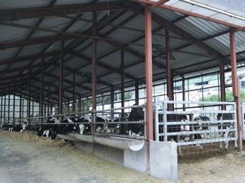牛を思い、牛のために行動し、牛を育てるための理想のカタチを追い求め続けて100年以上 一緒に牛にとっての理想郷をつくっていきましょう!