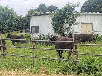 都市近郊で【野菜生産】と【和牛繁殖】の耕畜連携に取り組みます ◎和牛部門の中心メンバー募集!