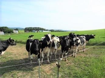 【期間限定アルバイト】北海道最北端の街、稚内市の牧場で働いてみませんか? ◎月給25万 ◎社宅あり