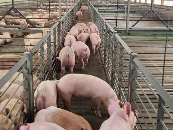 若手スタッフが活躍できる職場。その理由は・・?  「豚が好き」「食に関わりたい」という方、養豚の仕事にチャレンジしませんか?