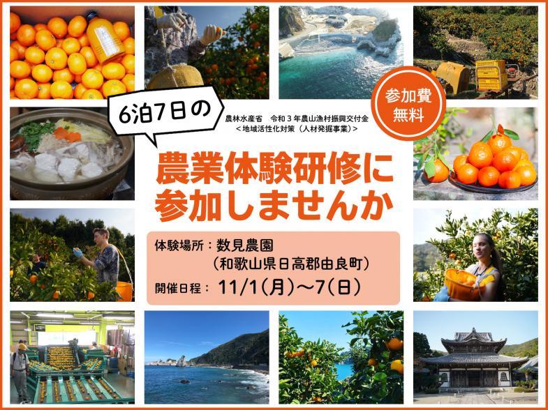 """6泊7日で農業を知る!""""日本のエーゲ海""""と称される和歌山県由良町(ゆらちょう)で、みかん農家さんのお手伝いをしながら農業について学びませんか?"""