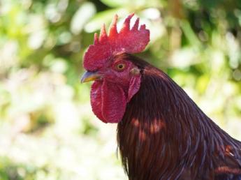 \正社員募集!地鶏養鶏と卵を生産!/ 私たちと一緒に健康で美味しい鶏を育ててみませんか? ◎年間休日114日!