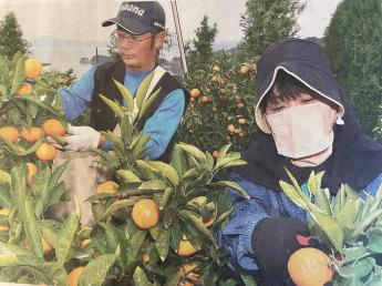 山田晃由農園