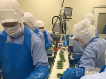 カット野菜の製造工場で、「きざみねぎ」と「カットサラダ」の工程・生産管理をお任せします【リーダー候補複数名募集】