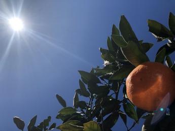 \期間限定アルバイトを8名募集!11月4日~2022年1月31日まで/ 愛媛県南予地域のみかん農家で、収穫作業をしてみませんか? 旅行会社大手HISが新たに立ち上げた新会社の注目人材サービスです!
