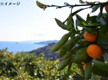 \正社員・契約社員募集!/ 日本全国の繁忙期の農家を季節ごとに移動して農作業のお手伝いをしませんか? 旅行会社HISが新たなに立ち上げた、主に農業分野で働く人材を扱う会社です。 ◎人気の愛媛県みかん農家で勤務スタート♪