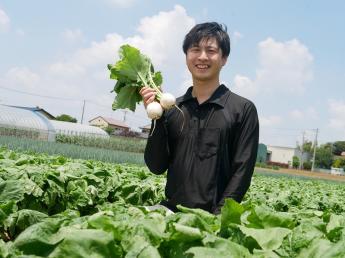 【正社員・アルバイトを同時募集!】 6代目として千葉・鎌ヶ谷で小かぶ・いちじくの栽培! 土づくりにこだわり、出来るだけ農薬を使用しない農業を実践! 未経験の方には、業務マニュアルで元に丁寧に説明いたします。 ◎丁寧な野菜・果実づくり。少しずつ新しい取組にも挑戦中!
