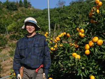 \みかん収穫シーズン到来/短期アルバイトを募集中 宿舎・昼食は無料!農業ビギナー大歓迎♪